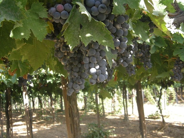 Israel's Wine Routes